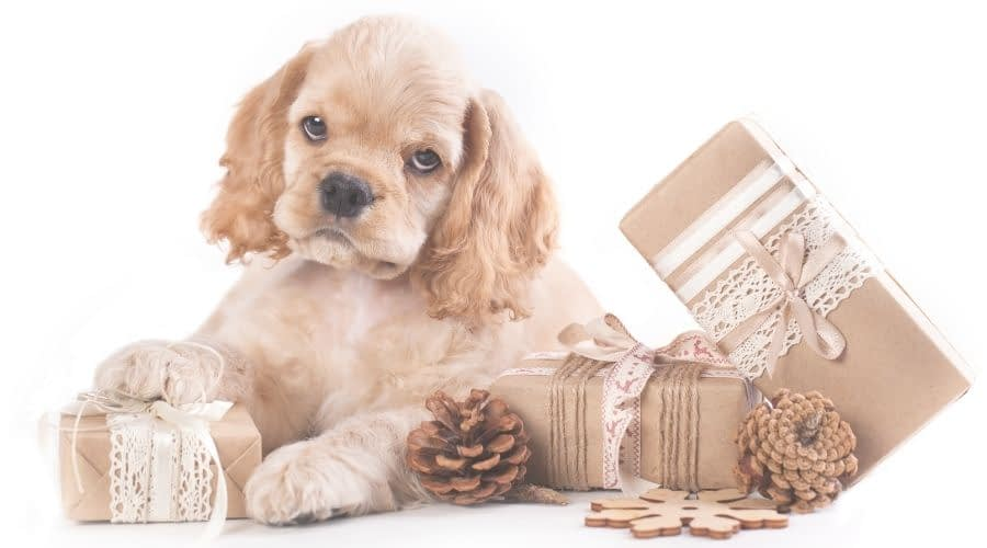 Christmas Gift For Pet Lovers